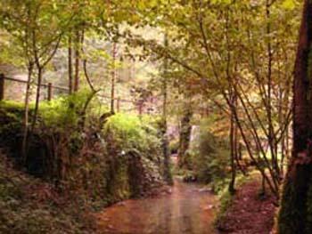 trees-stream